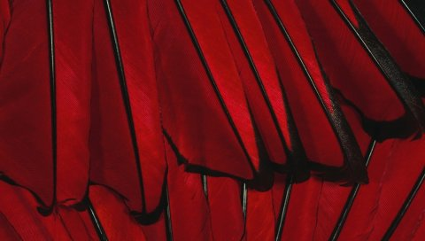 Черный, красный, цветок