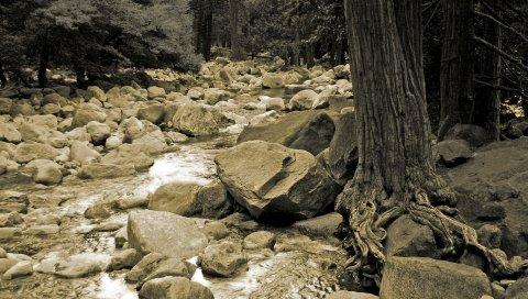 Камни, река, дерево, корни, туловище, черно-белый