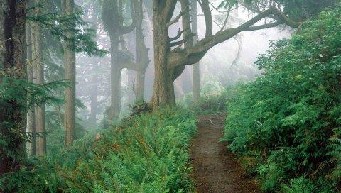 Трек, дерево, туман, деревья, папоротник, ветки