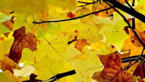 Листья, ветви, осень, желтый, сухой