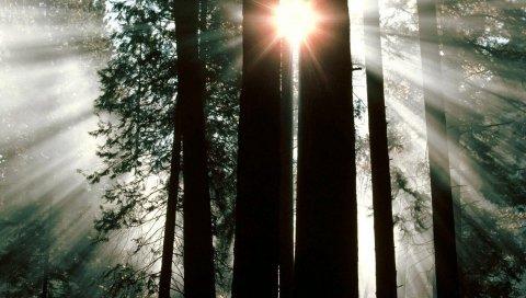 Дерево, деревья, сундуки, солнечные лучи, свет