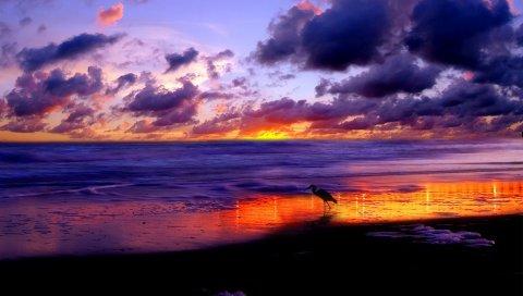 Море, цапля, берег, песок, вечер, небо, облака