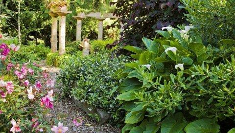 Зелень, сад, цветы, растения, лето