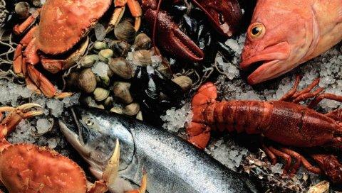 Морепродукты, свежие, рыбы, крабы, омары, мидии