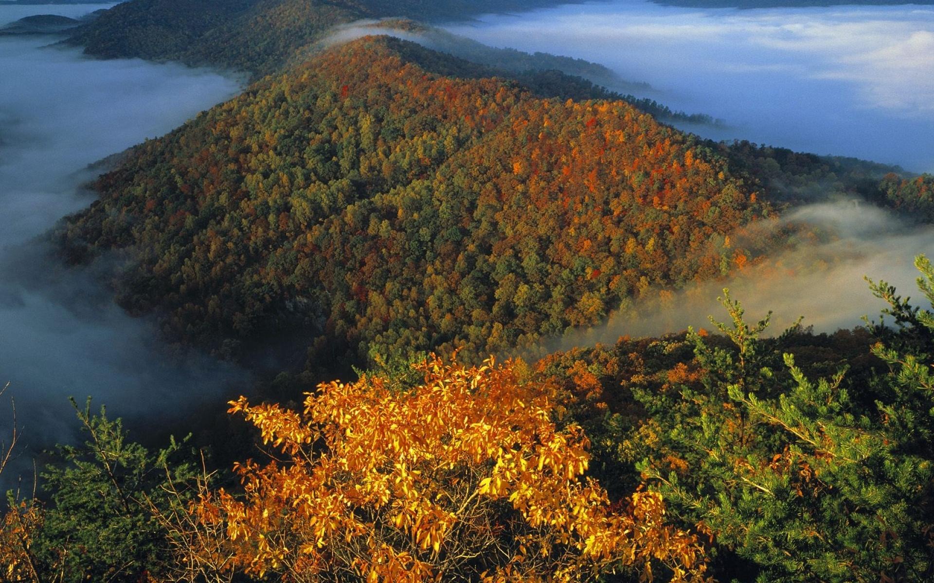 Картинки Горы, деревья, туман, вуаль, осень фото и обои на рабочий стол