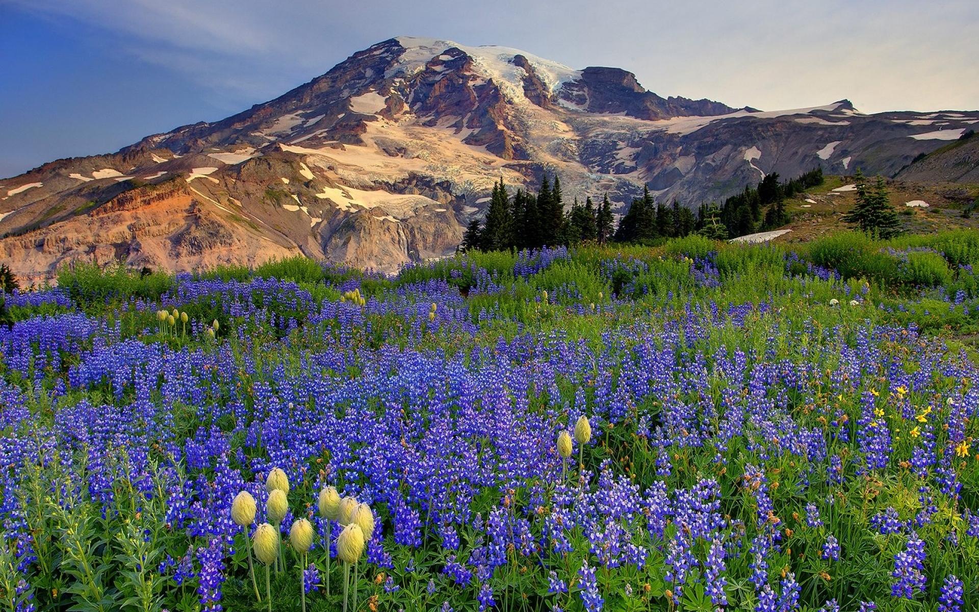лункевич цветущие горы картинка материал