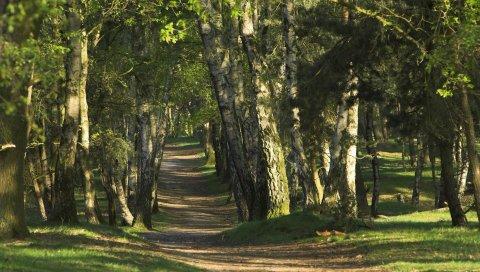 Деревья, дерево, сундуки, тропа