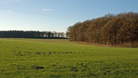 Поле, трава, осень, деревья, забор