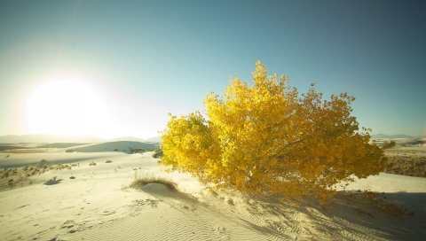 Пустыня, песок, дерево, листья