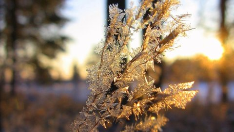 Ветка, мороз, кристаллы, лед
