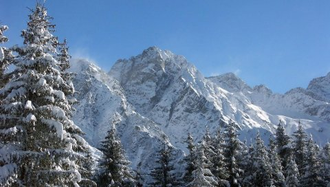 Горы, величие, снег, ели