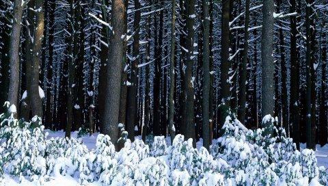 Дерево, деревья, сундуки, кусты, сугробы