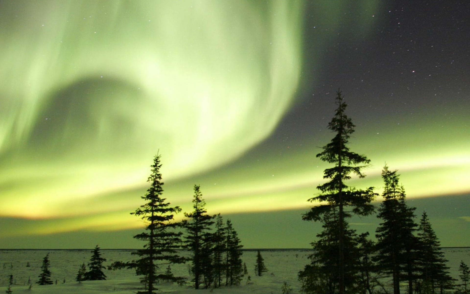 Картинки Ночь, деревья, небо, полярные огни фото и обои на рабочий стол