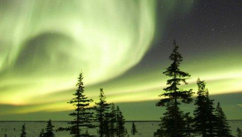 Ночь, деревья, небо, полярные огни