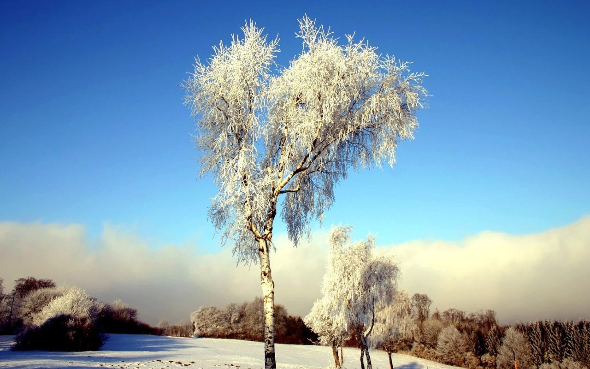Картинки березы зимней