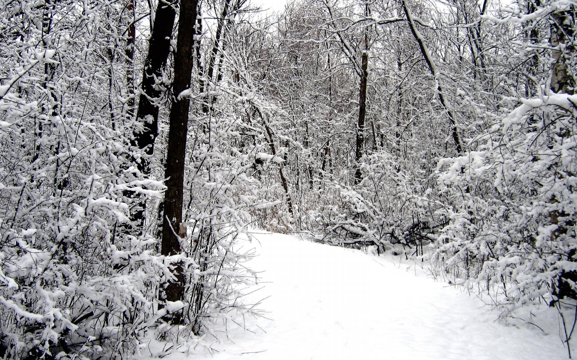 Картинки Дорога, дерево, снег, зима фото и обои на рабочий стол