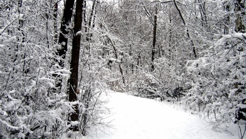 Дорога, дерево, снег, зима