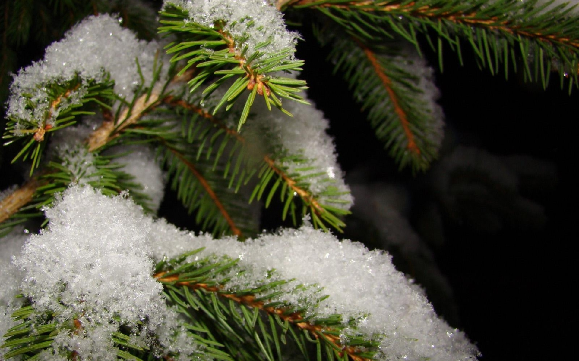 иисуса, картинки на рабочий стол снег на елках представляет собой