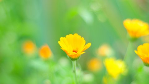 Макро, цветы, трава, желтый, луг