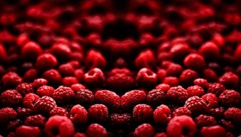 Макро, малина, ягода, красный