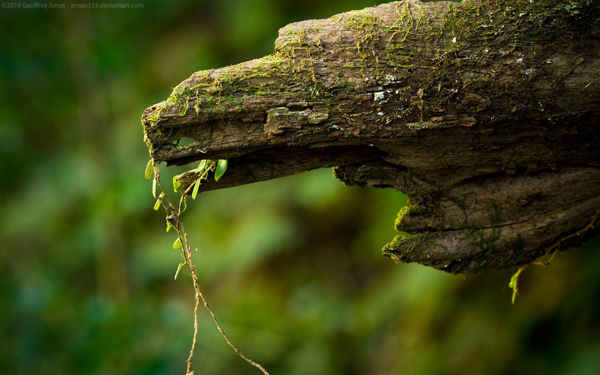 Картинки Макро, зеленый, лес, мох фото и обои на рабочий стол