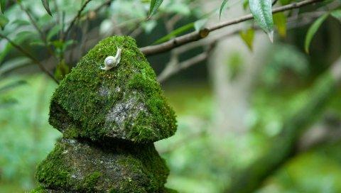Камни, мох, улитки, трава, зеленый