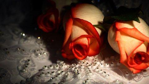 Роза, пара, белый, оранжевый, узор