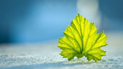 Зеленый, листья, синий