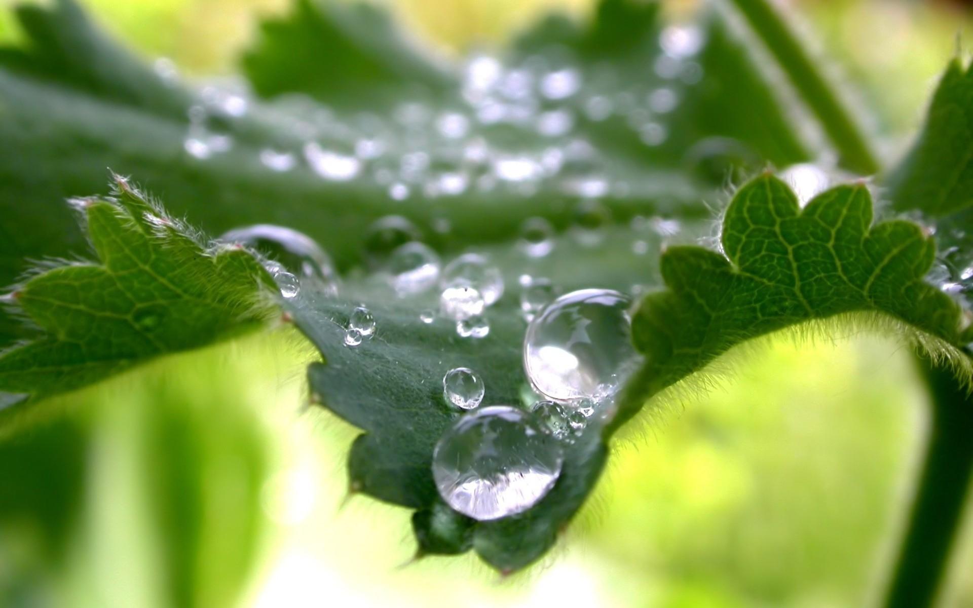 роса листья природа загрузить