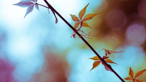 Лист, ветка, яркий, светлый