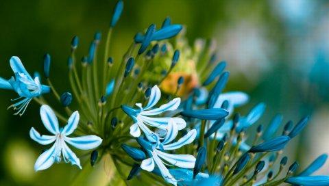 Цветы, синий, зеленый, макро, лепестки