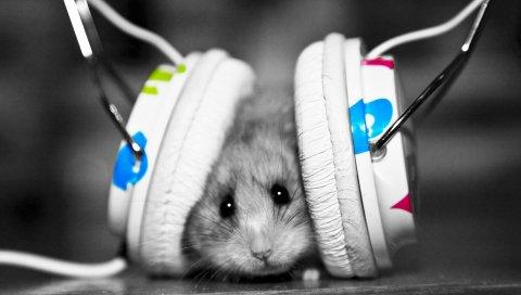 Смешной, музыкальный фанат, музыка, маленький, хомяк
