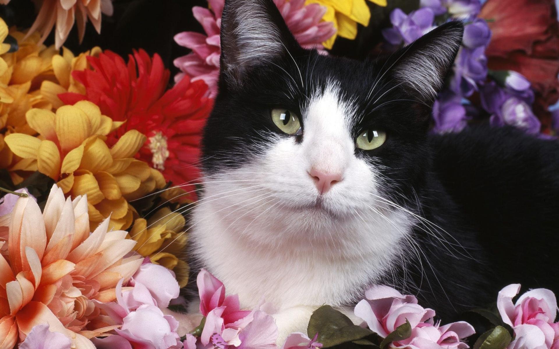 Картинки, кошки и цветы картинки