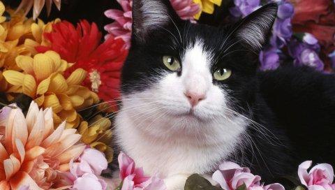 Кошка, кошки, черный, белый, цветы