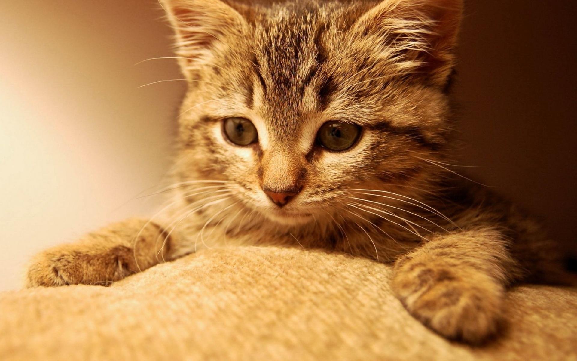 Картинки Кошка, кошки, котенок, имбирь фото и обои на рабочий стол