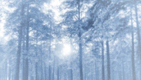Новый год, рождество, деревья, снег
