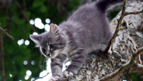 Прогулки, деревья, кошка, котенок, серый
