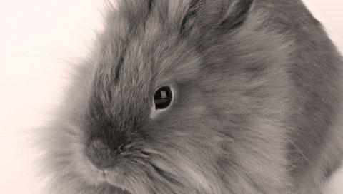 Серый, ребенок, кролик, пушистый