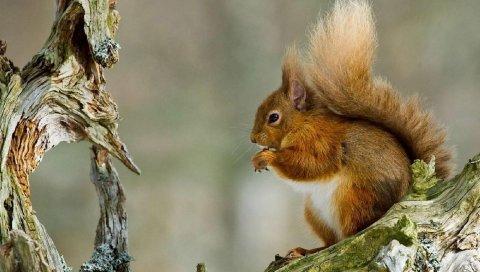 Зима, рыжие волосы, белка, нитка, снег
