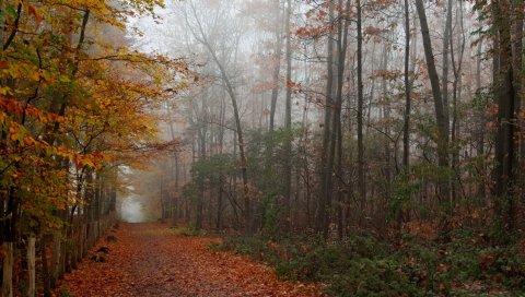 Осень, лес, деревья, листья, тропинка