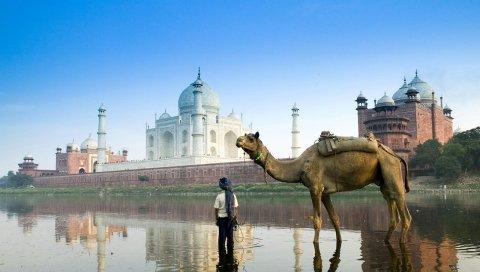 Ислам, архитектура, верблюд, улица
