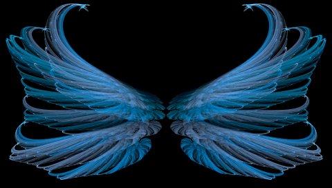 Синий, черный, крылья, белый, яркий