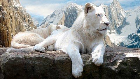 Снег, Леопард, Mac