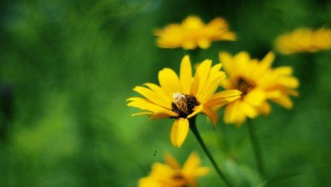 Желтый, цветы, лето