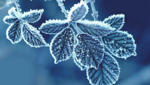 Холод, листья
