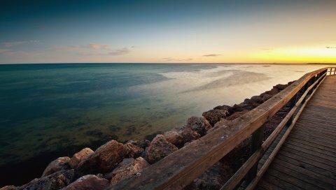 Пляж, Моллюск