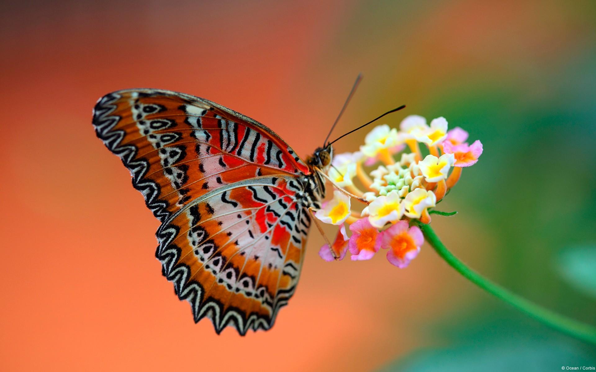 Картинки Цветок, бабочка фото и обои на рабочий стол