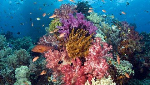 Рыба, тропические