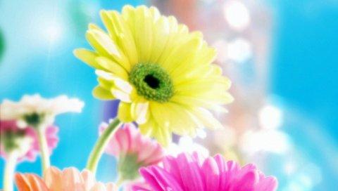 Цветы, Гламурные