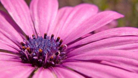 Широкий, розовый, цветочный